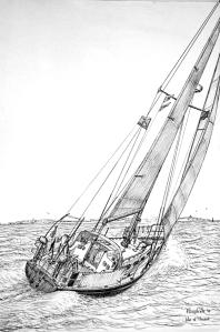 Tystie-1a
